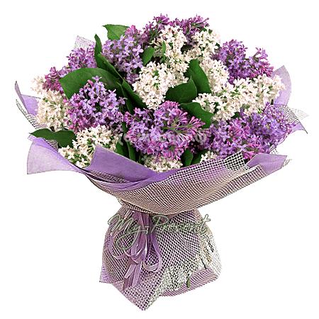 Bouquet of сamomiles
