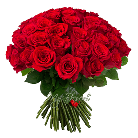 Bouquet of red roses (50 cm.)