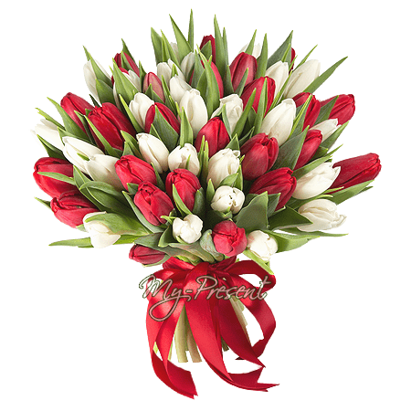 Bouquet of red and white tulips in Stockholm