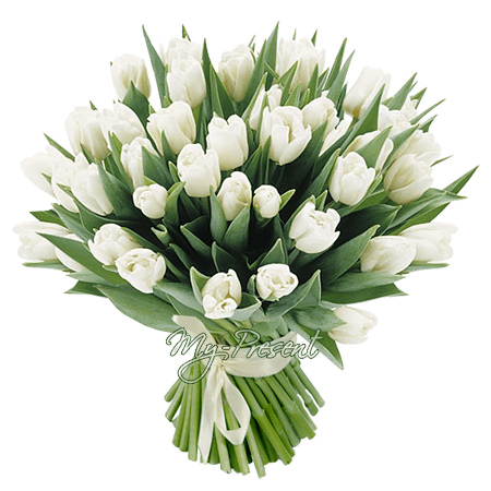 Bouquet of white tulips in Rostov-on-Don
