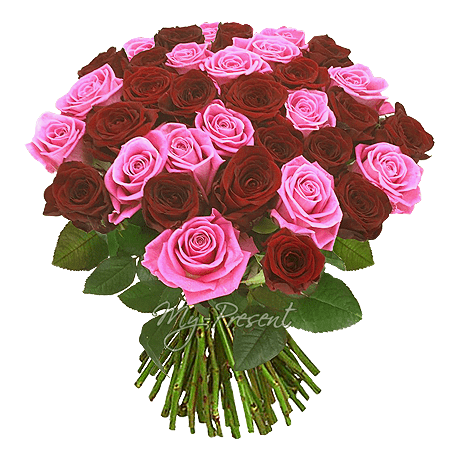 Bouquet of red and pink roses (60 cm.) in Warsaw